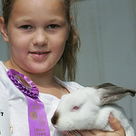 Noel Baker, 9, of Avon hugs C.J., a Californian rabbit who won Best of Breed at the Lorain County Fair.  photo by Chuck Humel