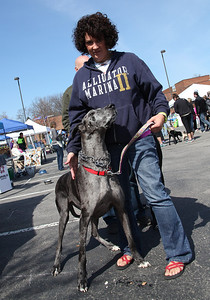 """Tammi White of Wadsworth and her 7-yr-old Great Dane """"Sophie"""" at the Love-a-Stray Dog Walk. Sophie was a """"rescue"""" dog from the Cincinnati area. photo by Ray Riedel"""