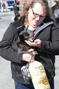 Oreo, a 10-year-old  Chihuahau enjoys a snack from owner Carmen Stevens of Sheffield Lake at the Love-a-Stray Dog Walk. She adopted Oreo years ago in Michigan. photo by Ray Riedel