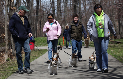 """Robert Andrews (left) walks 14-yr-old """"Maurice"""", followed by (left to right) Karen and Ryan McCoy walking siblings """"Tank"""" and """"Maddie"""", and Lina Paesani an """"I love a stray"""" volunteer, walking her dog at the Love-a-Stray Dog Walk in Avon Lake. photo by Ray Riedel"""