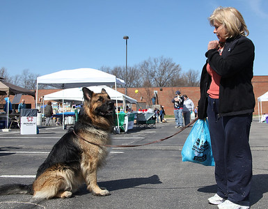 """Samson, a 3-yr-old 110 lb long coated German Shepherd, is not distracted by people and other dogs when owner Kim McElheny has him """"stay"""" at the Love-a-Stray Dog Walk in Avon lake. photo by Ray Riedel"""