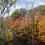 This week might be the last chance to catch peak fall color at French Creek Reservation in Sheffield. STEVE MANHEIM/CHRONICLE