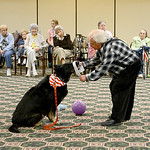 Richard Mann, of North Ridgeville, brought his german shepard Molly to Wesleyan Villiage on Aug. 15.  Richard and Molly entertained the crowd of residents with a series of tricks Molly can p …