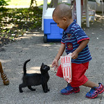Elijah Daniels, 2, of Oberlin, shares his picnic food with a kitten during the Elyria YWCA picnic on Aug. 16.  KRISTIN BAUER | CHRONICLE