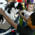 Kobe Whittaker, 4, of Elyria plays with Japanese Chin dogs Tag and Iris at Meet the Breeds at the Avon Public Library on Aug. 16. KRISTIN BAUER | CHRONICLE
