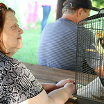 Audrey Wilamosky, of North Olmsted, looks at her Cocktail Leroy during the second annual Blessing of the Pets at Fields United Methodist Church in North Ridgeville Sunday evening. ANNA NORRI …