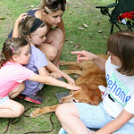 Emily and Molly Kralik and Julie Marlowe pet Moses, an 8-year-old Golden Retriever, as Kim Delfing, a volunteer with Golden Retrievers in Need, tells them about Moses during Paws in the Park …