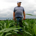 Ron Pickworth stands in his 22-acre field of corn demonstrating its height just one day before the fourth of July. KRISTIN BAUER | CHRONICLE
