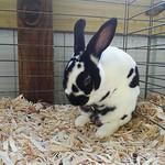 Corinne Jaenke caught this rabbit at bath time.