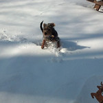 Rebecca Montgomery-Deaton's dog, Dexter, loves the snow.