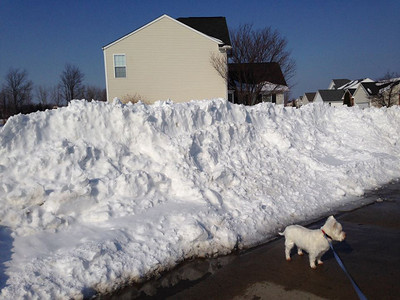 Joy Bomba's dog, Spencer, could easily get lost in the snow.