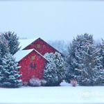 Dawn Neely Randall said these barns and evergreens in the Firelands countryside make her want to build a red shed in her backyard before next winter.
