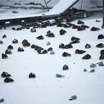 Chas Burton found dozens of birds at Spitzer Marina Harborwalk in Lorain just off the Black River.