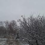 Birds are enjoying the snow in Andy Dellinger's backyard in LaGrange.