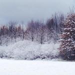 Mary Nowagarski Reisinger sent this photo from Eaton Township on Nov. 12, 2013.