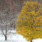 Fall meets the first winter snowfall along Route 2 at the Route 2/Ohio Turnpike split on Nov. 12. BRUCE BISHOP/CHRONICLE