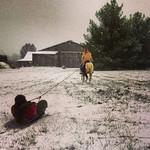 Hannah Estep pulls Lauren Kurgan on horse-drawn sled ride at Buckeye Equine Center in York Twp.