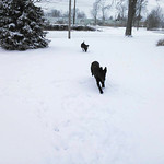 Crystal Burns' dogs Millie and Ellie have some fun in the snow on Feb. 5 in Wellington.