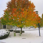 Joyce Young took this photo of colorful leaves amid snowfall near Augusta Drive off Chestnut Ridge on Nov. 12.